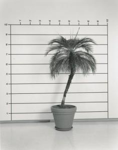 bochner_mel_measurement_plant