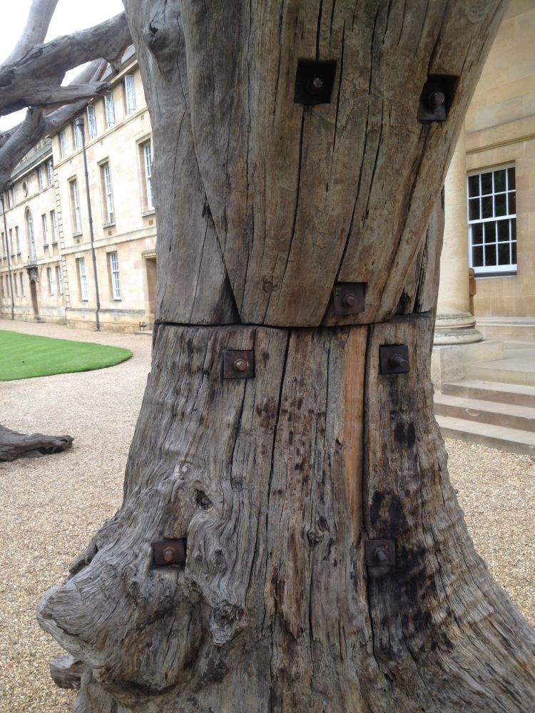 ai wei wei tree closeup